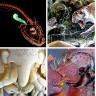 Bilim İnsanlarının Bu Yıl Keşfettiği 10 Tuhaf Canlı Türü