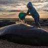 Bir Balina, Midesinde Bulunan 8 Kilogram Plastik Yüzünden Öldü