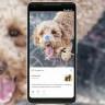 Kamerayla Arama Yapan Google Lens, Artık Bağımsız Bir Uygulama Oldu!