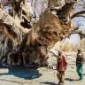 Bilim İnsanlarını Şaşırtan Olay: Binlerce Yıllık Baobab Ağaçları Aniden Öldü!