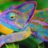 Bukalemunlardan Esinlenen Bilim İnsanları, Renk Değiştirebilen Nano Lazer Teknolojisi Geliştirdi