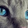 Kedilerin Gözbebeklerinin Şeklinin Sırrını Biliyor muydunuz?