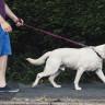 Yaz Günlerinde Evcil Hayvanlarınızı Sıcaklardan Nasıl Koruyabilirsiniz?