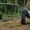 Hayatlarında İlk Kez Ayna Gören Vahşi Hayvanlar, Nasıl Tepki Verir? (Video)