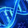 Genom Düzenlemesi İle Kolesterol Hastalığının Çözümü Bulunabilir