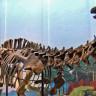 Dinozorların Ne Yediği Ortaya Çıktı: 150 Milyon Yıl Öncesine Ait Bitkiler Yetiştirildi