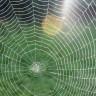 Örümcek İpeğinden Üretilen Suni Deriler, Yaraların İyileştirilmesinde Kullanılacak