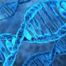 Bilim İnsanları, Farelerde Genetik Bozuklukları Anne Rahminde Tedavi Etmeyi Başardı
