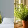 Evinizin Havasını Değiştirecek Oksijeni Bol Bitkiler