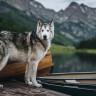 Instagram'da Milyonlarca Takipçisi Olan En Popüler 10 Köpek