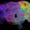 Bilim İnsanları, Şimdiye Kadar Elde Edilmiş En Detaylı Beyin Görüntüsünü Paylaştı (Video)