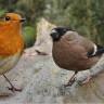 Kuşları Seslerinden Tanıyan Yapay Zeka Yazılımı Geliştirildi