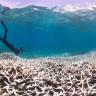 Bilim İnsanları, Okyanusta Kalan Son Vahşi Bölgeleri Tespit Etti