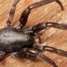 Örümceklerin Her Yerde Olabileceğini Kanıtlayan 23 Fotoğraf