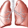 Biyomühendisler, Domuzlar Sayesinde Akciğer Geliştirdiler