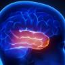 6 Yaşındaki Çocuğa Yapılan Ameliyat, İnsan Beyninde Gizlenmiş Olağanüstü Yetenekleri Ortaya Çıkardı