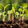 Bilim İnsanları, Bir Tohumun Fidana Dönüşme Sürecini İnceledi