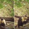 Maymunlar Yavaş Yavaş Taş Devrine Giriyor Olabilir mi?