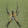 Bilim İnsanları, İpek Böceklerine Örümcek Ağı Geni Aktararak Özel Bir Ağ Elde Etmeyi Başardı
