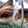 Avustralya'da 25 Milyon Yıl Öncesine Ait Köpek Balığı Dişleri Bulundu