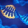 DNA'ların Kırılmadan Düzenlenmesine İzin Veren Yeni Yöntem: CRISPR-SKIP