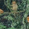 Bilim İnsanları Tarafından Daha Önce Görülmemiş 3 Yeni Primat Türü Keşfedildi