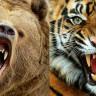 Dünyanın En Güçlü Çenesine Sahip 25 Vahşi Hayvan (Video)