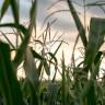 Küresel Isı Artışı, Böceklerin Daha Fazla Tarım Mahsulü Tüketmesine Sebep Olacak