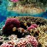Bilim İnsanları, Mercanları Hayata Nasıl Geri Döndüreceklerini Keşfettiler