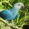 Son 20 Yılda 8 Kuş Türünün Daha Soyu Tükendi
