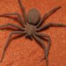Bir Müzeden, Dünyanın En Zehirli Örümceği de Dahil 7000 Böcek Çalındı