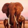 Apple, The Queen Elephant ve Wolfwalkers Filmlerinin Haklarını Satın Aldı