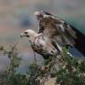 Gözü Yükseklerde Olan ve Neredeyse Uçak Mesafesinde Uçabilen 7 Kuş Türü