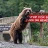 Vahşi Yaşamdan Birbirinden Komik Fotolar