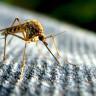 Sivrisinekleri Kendinizden Uzak Tutmak İçin Uygulayabileceğiniz 6 Doğal Yol