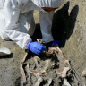 İtalya'da 1200 Yıl Önce Yaşamış İnsanların İskeletleri Bulundu