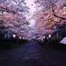 Japonya'da Bazı Ağaçlar, 2 Mevsim Önceden Çiçek Açmaya Başladı: Sizce Neden?