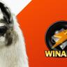 Efsaneler Efsanesi Winamp'ın 5.8 Sürümü Resmi Olarak Yayınlandı