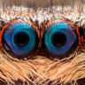 Bilim İnsanları Örümcek Korkusunu Yenebilmek İçin Yeni Bir Yöntem Geliştirdi