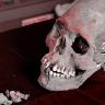 Araştırmalara Göre Anomaliler, Geçmişte Yaşayan İnsanlarda Daha Sık Görülüyor