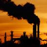Şehirdeki Kirlilik, Böceklerin Hayatını ve Ekosistemi Tehlikeye Atıyor