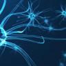 Üzüntü, Beynin İki Bölgesi Arasındaki İletişimi Artırıyor