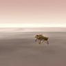 NASA, 6 Yıldan Sonra Mars'a İlk Kez İneceği Görevi Canlı Yayınlayacak