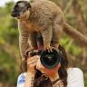 Yılın Vahşi Yaşam Fotoğrafçısı Yarışmasının Kazanan Fotoğrafları Belli Oldu