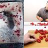 Farelerin, Dünyanın En Acı Biberini Bana mısın Demeden Yediği Deney (Video)