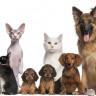 Hayvan Haklarıyla İlgili Teknolojik Dokunuş: Deri Altına Çip