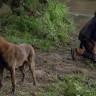 Bilim İnsanları, Walking Dead'deki Zombi Virüsünün Hayvanlara Neden Bulaşmadığını Açıkladı