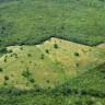 Brezilya, 1 Milyon Futbol Sahası Boyutunda Orman Kaybetti