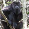 Uluyan Maymunları İnceleyen Bilim İnsanları, Yeni Türlerin Evrim Sürecine Dair Kanıtlar Buldu