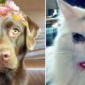 Snapchat Filtreleri, Artık Köpekleri de Algılayacak